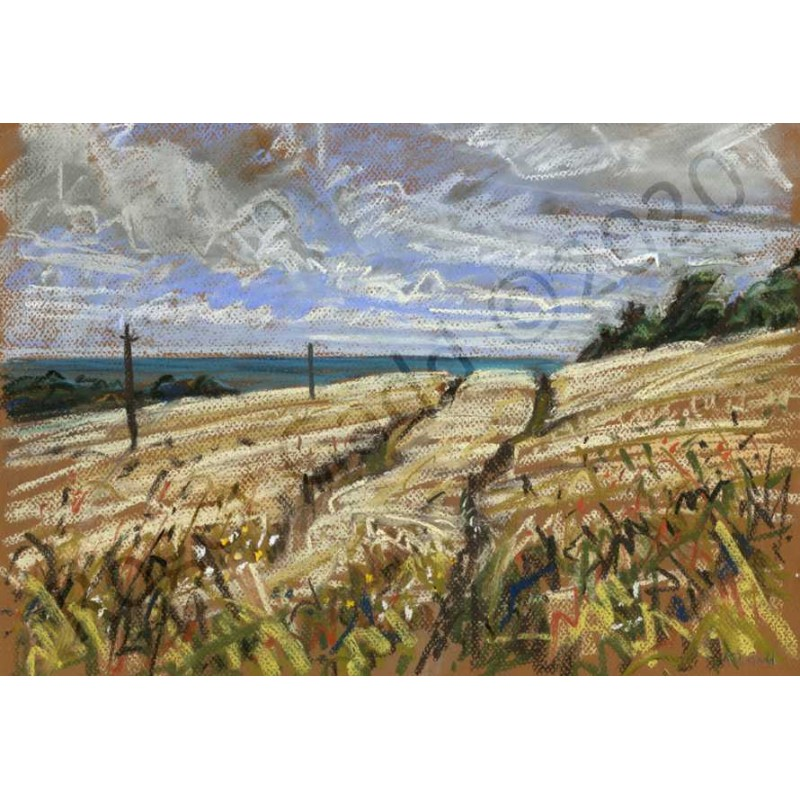 Barleyfield by Roger Gadd